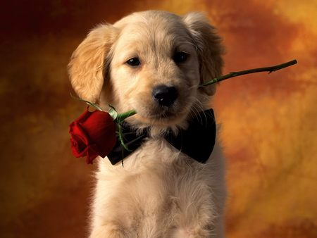 Puppy Love - dog, rose, flower, puppy love, beautiful, love, picture, puppy