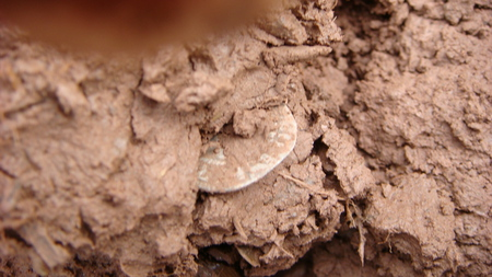 coin in the mud - penny, mud, coin, silver, king edward