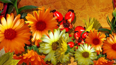 Falls Fantastic Flowers - berries, orange, season, gerberas, fall, autumn, daisy, firefox persona