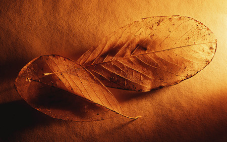 together - light, warm, another leaf, leaf, macro, gold