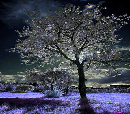 Moonlight Tree Other Amp Nature Background Wallpapers On