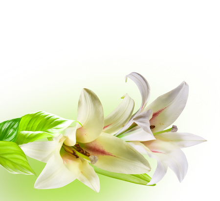 Lilies - cool, flowers, beautiful, art, harmony, lilies, flower, nice, white, gentle, drawing, elegantly, bouquet