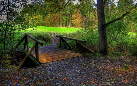 Bridge To The Forest - splendor, wood, beautiful, path, beauty, fall, autumn, magic, carpet of leaves, grass, forest, woods, green, trees, field, lovely, carpet, leaves, autumn colors, bridge, nature, peaceful