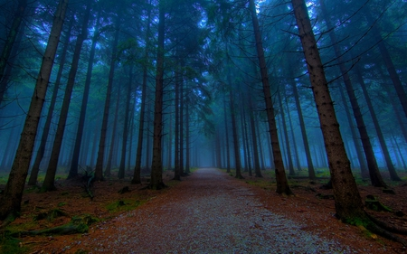 MYSTICAL FOREST PATH - trees, road, pathway, an evening, avenue, path, tree, trail, beautiful photos, forest, nature, alley