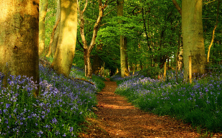 Path In The Forest - woods, peaceful, sunny, plants, wild, forest, other, nature, trees, lovely, jungle, grass, road, trail, way, colors, leaves, beauty, tree, path, colorful, sunlight, wildflowers, beautiful, flowers, green, pretty, splendor, spring