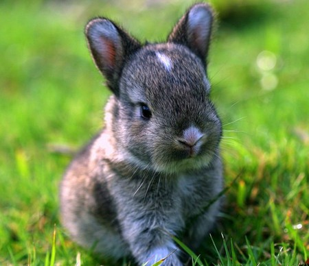 Photo: Cute Baby Bunnies Playmate - Cuddly Baby Bunny photos 19 ...