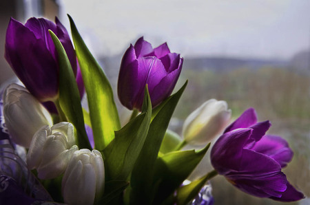 white and purple  flowers  nature background wallpapers on, Beautiful flower