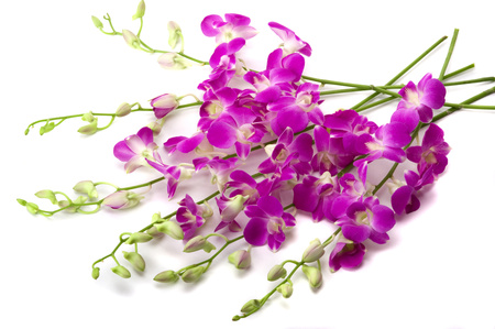 Orchids - cool, flowers, beautiful, harmony, purple, flower, nice, photography, orchid, gentle, photo, elegantly, bouquet