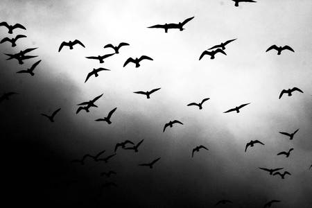 Flight of birds - nature, animals, sky, birds