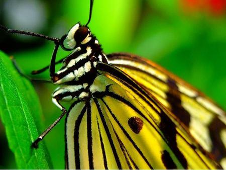 Butterfly - animal, wings, leaves, butterfly