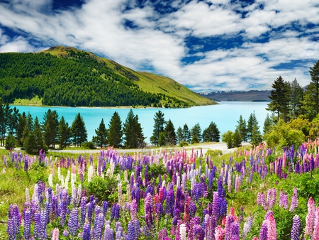 Landscape - peaceful, land, forest, mountain, nature, trees, mountains, grass, picturesque, lavender, water, colors, flower, colorful, lake, day, green, pretty, clouds, scenic, view, lovely, floral, road, hill, ske, landscape, beauty, daylight, tree, love, beautiful, flowers, splendor, sky, spring