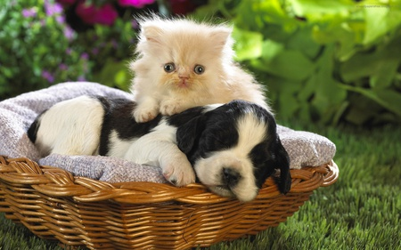 Cute Cat and a Puppy - dogs, cat, puppy, funny, cute, sweet