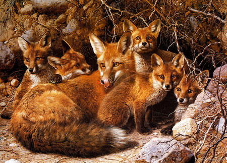 Image result for fox family