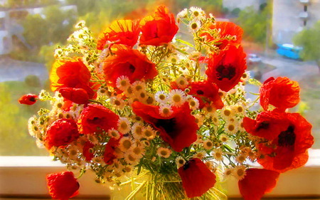 Wish for a day filled with sunshine - flowers, window, spring, daisies, sunny, red poppies, yellow
