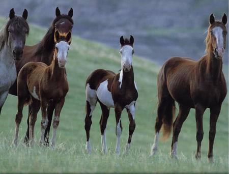 The Wild Horses - Horses & Animals Background Wallpapers ...