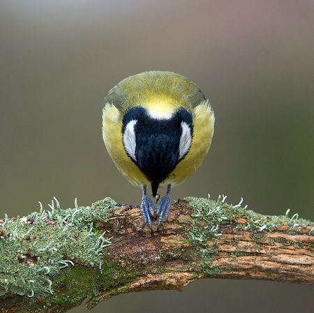 Let us pray - cute, pray, bird, beautiful