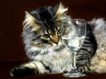 CAT,DRUNK,GLASS,greey,black, hairy,angry