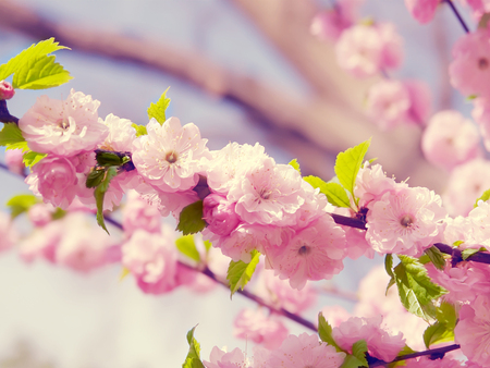 Beautiful Spring Pictures beautiful spring - other & nature background wallpapers on desktop
