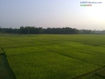NATUREL BEUTY OF BANGLADESH