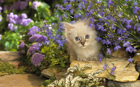 Cat in garden Cats Animals Background Wallpapers on Desktop