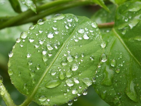 Wet Green Leaf - raindrops, gree, leaf, nature, rain