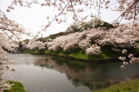 Beautiful Spring Landscape - spring, beautiful, season, river, blossoms, landscape, home, white, nature