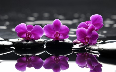 Reflection - flowers, reflection, abstract, beauty, relax, purple, flower, fashion, spa, stones, entertainment, stone, black, color, power, special, photography, feng shui, nature