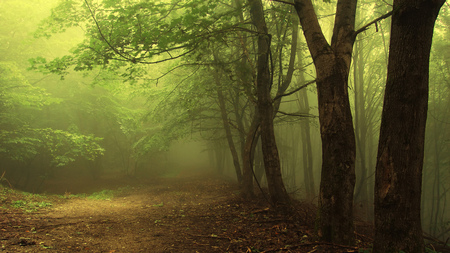 Green Mist Forest - nature, path, beautiful, misty