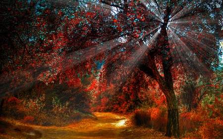 SUNBURST IN AUTUMN FOREST - light, beautiful, season, pathway, forest, sunrays, autumn
