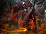 SUNBURST IN AUTUMN FOREST