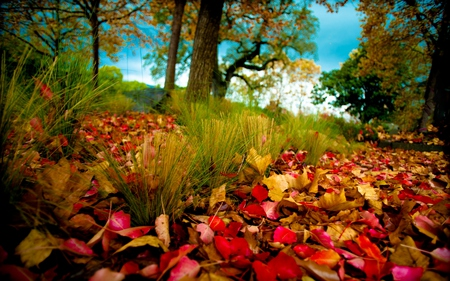 Autumn Leaves - beautiful, pretty, path, beauty, fall, autumn, yellow, trail, tree trunk, grass, forest, red, woods, colourful, green, mounts, trees, colorful, season, sky, colors, lovely, leave, carpet, branches, golden, leaves, autumn colors, clouds, autumn leaves, nature, peaceful