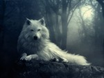 White Wolf In The Dark
