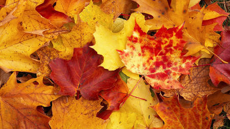 Autumn Leaves - leaves, rust, brown, red, autumn, yellow