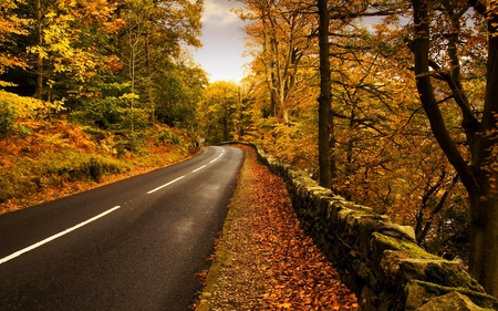 AUTUMN DRIVE - road, beautiful, peaceful, clean, autumn
