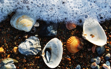 foam and seashells - fun, beauty, seashells, beach, water, wet, photography, ocean, shell, seamwater