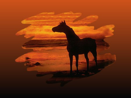 Sunset Silhouette - Horse F1 - red, sunset, photography, silhouette, photo, nature, horse, equine, sky