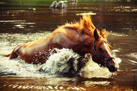 horse - blue, horse, brown water, beautiful