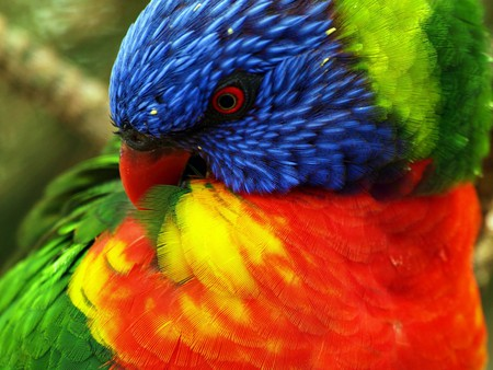 pretty parrot - green, tropical, colorful, rainforest, blue, animal, beauty, yellow, bird, wild, forest, red, nature, parrot