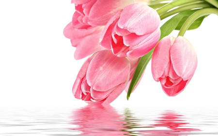 Pink Tulips - flowers, pink tulip, beautiful, reflection, pink, pretty, romantic, beauty, for you, tulip, green, with love, colors, lovely, tulips, pink tulips, photography, still life, nature, romance