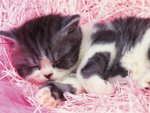 Cute kitten sleeping
