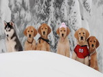 Snow Buddies Wallpaper