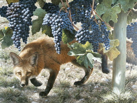 Image result for fox in the vineyard