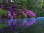 Reflections of purple