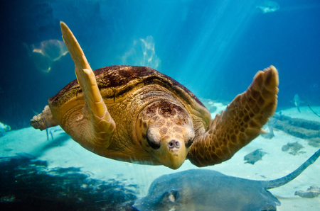 Sea Turtle - water, aquatic, sea turtle, turtle, ocean