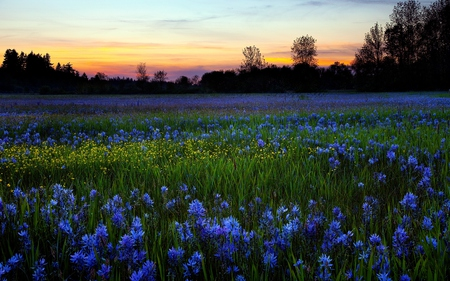 Field Of Flowers - field, blue, peaceful, nice, nature, trees, grass, valley, lavender, yellow, colors, fields, colorful, field of flowers, green, pretty, clouds, dew, view, sunrise, lovely, morning, floral, yellow flowers, sunset, meadow, blue flowers, landscape, beauty, tree, wildflowers, beautiful, flowers, splendor, sky, spring