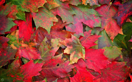 remember autumn - leaves, photography, red, nature, fall, beauty, autumn