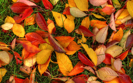 autumn floor - autumn, colorful, photography, colors, nature, fall, red, yellow, beauty, orange, pretty, green, leaves