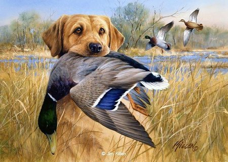 hunting dog *jim killen - cats & animals background wallpapers