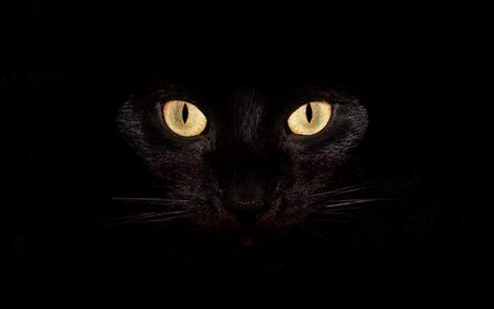 black cat - feline, halloween, black, closeup, pretty, bright, animal, yellow, dark, eyes, cat, scary, superstition, kitty