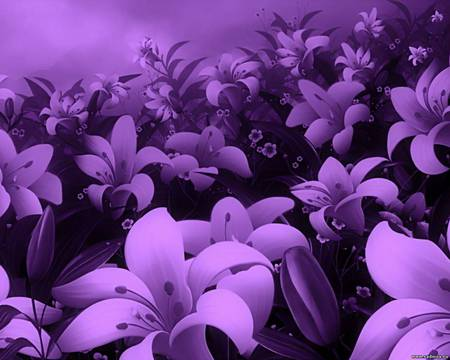 purple flower field  flowers  nature background wallpapers on, Beautiful flower